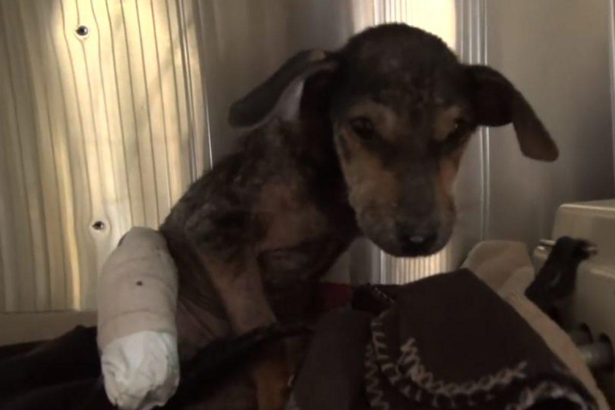 También lo operaron. Foto:Youtube/Hope for Paws. Imagen Por: