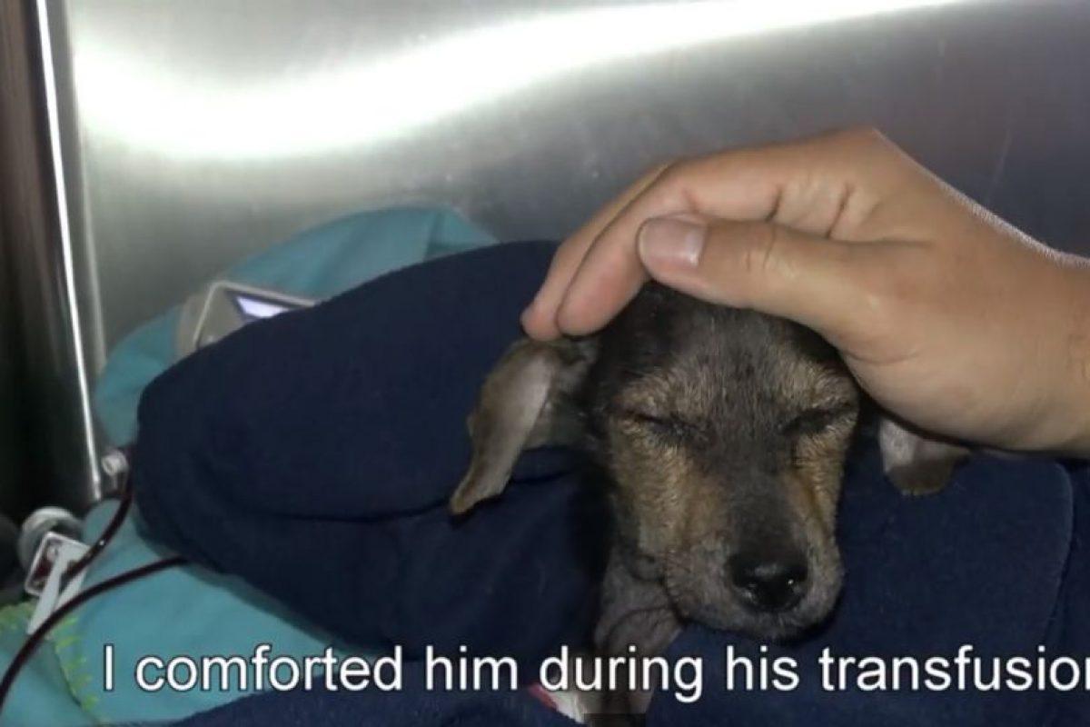También le hicieron transfusión de sangre. Foto:Youtube/Hope for Paws. Imagen Por: