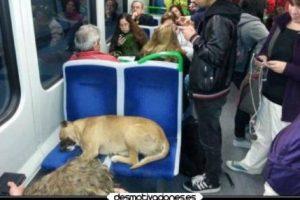 WTF! Foto:Funny Pics. Imagen Por: