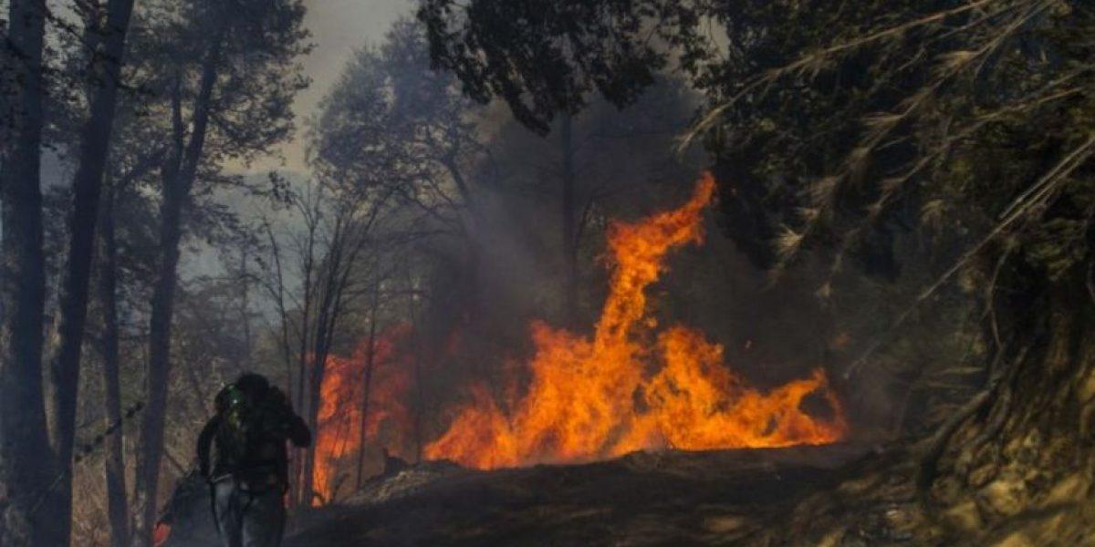 Onemi confirma 53 incendios forestales activos en todo el país