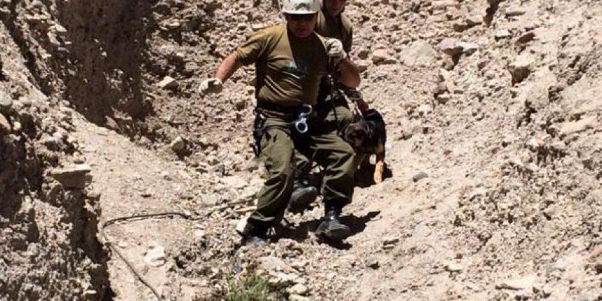 Amplio operativo policial para rescatar a perrito atrapado en cerro