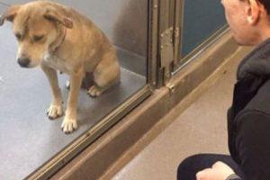 Quienes maltratan animales comienzan a hacerlo desde la niñez. Foto:Imgur. Imagen Por: