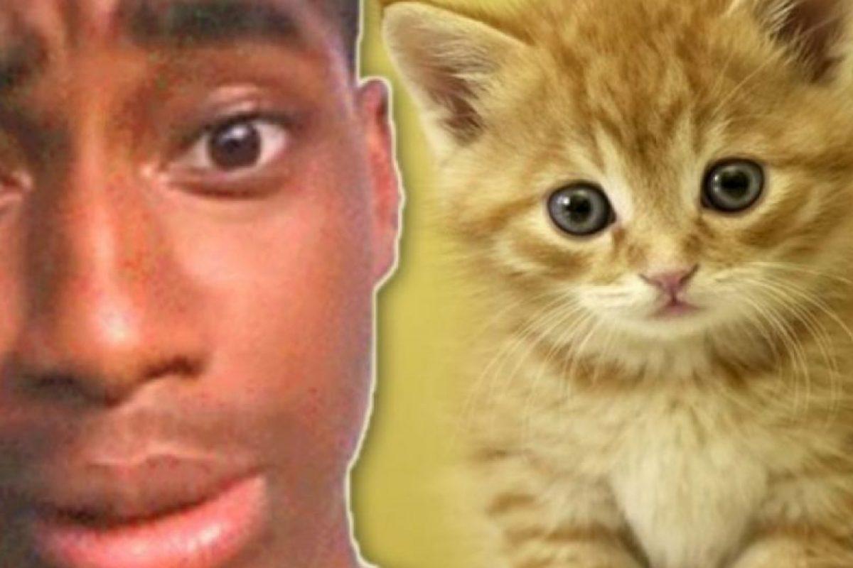 """Pateó a su pequeño gatito: Walter Easley se ganó el odio de Internet cuando tuvo la """"brillante idea"""" de grabarse a sí mismo pateando a su gatito. Inicialmente se burló de los comentarios de odio en Twitter diciendo: """"lol, ahora tengo algo con lo qué reírme todo el día"""". Pero el video se volvió viral y a él lo arrestaron. Tuvo que pasar 60 días en prisión. El gatito no sufrió ningún daño, pero a su dueño le quitaron la custodia. Foto:Oddee. Imagen Por:"""