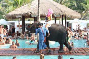 Foto:Vía Facebook / Wildlife Friends Foundation Thailand. Imagen Por:
