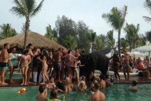Posteriormente, Nikki Beach publicó en su cuenta de Twitter que el elefante estaba siendo vigilado por su cuidador. Foto:Vía Facebook / Wildlife Friends Foundation Thailand. Imagen Por: