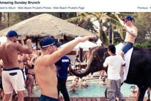 """Exótico """"atractivo turístico"""". El resort Nikki Beach lleva un pequeño elefante para que los asistentes se entretengan con él. Foto:Vía Facebook / Wildlife Friends Foundation Thailand. Imagen Por:"""