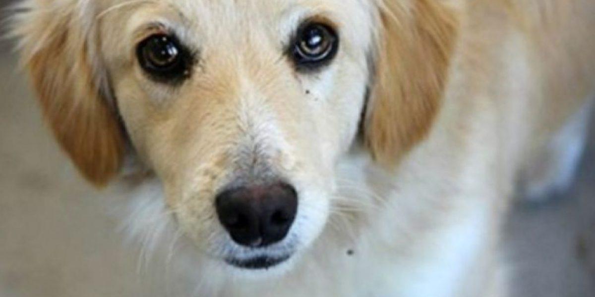 Desgarrador: niña encontró a su perro perdido ya cocinado y listo para vender