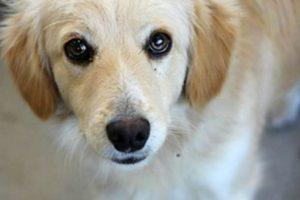 Durante décadas se ha afirmado y estudiado la existencia de vínculos entre la crueldad animal, conductas antisociales y violencia interpersonal. Foto:Imgur. Imagen Por: