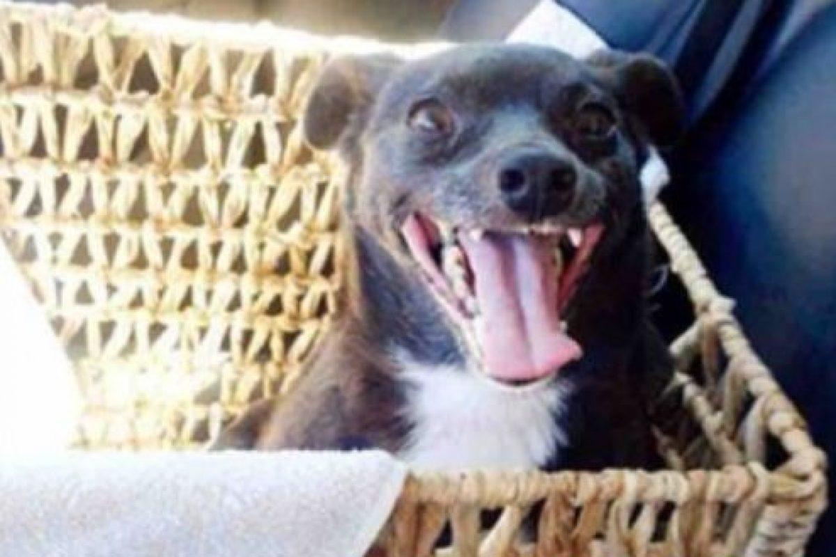 En España, por ejemplo, los animales más abandonados son los perros. Foto:Imgur. Imagen Por: