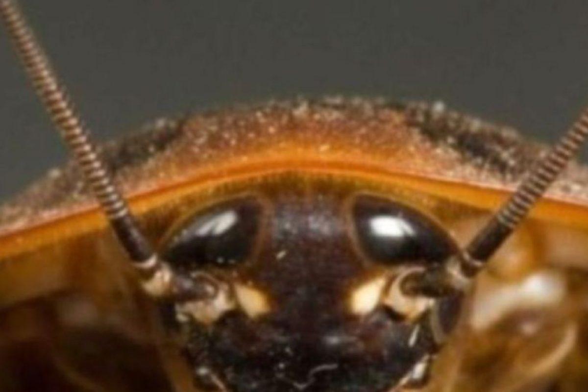 Cucarachas. Foto:vía Getty Images. Imagen Por: