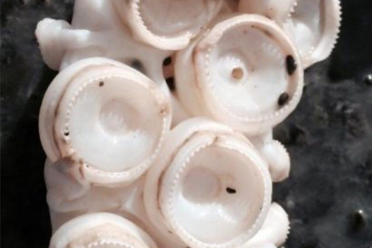 Por el momento lo exhiben en un congelador de cristal. Foto:Vía facebook.com/kkmarineaquarium. Imagen Por: