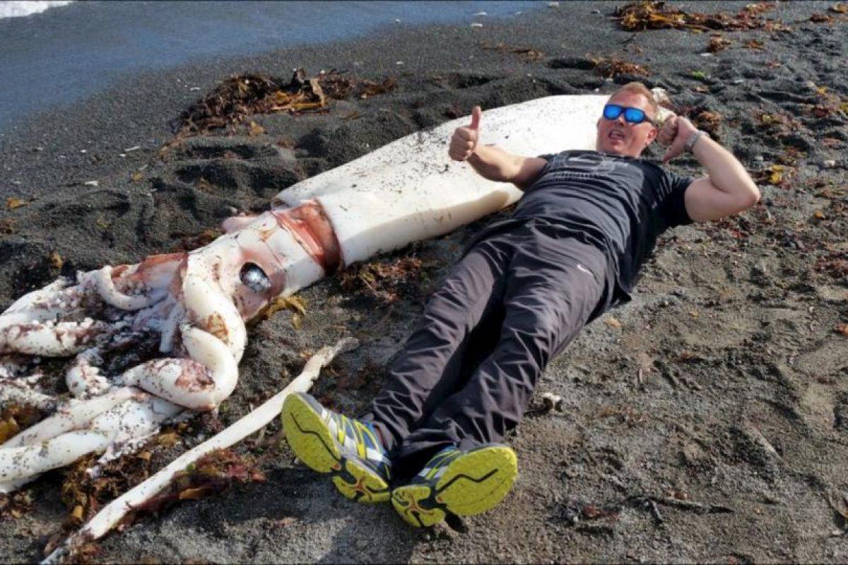 Descubren un calamar gigante en las playas de Nueva Zelanda. Foto:Vía facebook.com/kkmarineaquarium. Imagen Por: