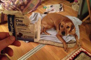 El perro sin estreñimiento. Foto:vía Imgur. Imagen Por: