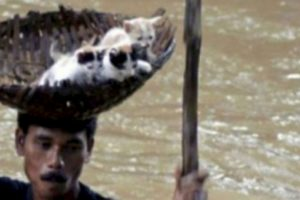 Este hombre rescata a tres gatitos de una inundación. Foto:vía AFP. Imagen Por: