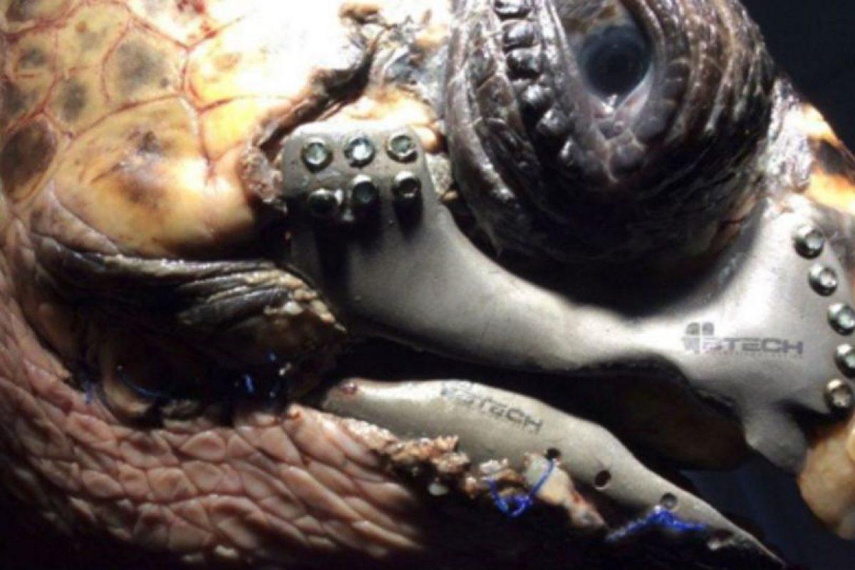 A continuación les preparamos algunos datos sobre las tortugas marinas Foto:Centro de Rescate y Rehabilitación de la Universidad Pamukkale en Denizli. Imagen Por:
