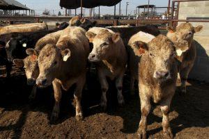 El ataque fue en un mercado de ganado en la aldea Garkida en Nigeria. Foto:Getty Images. Imagen Por: