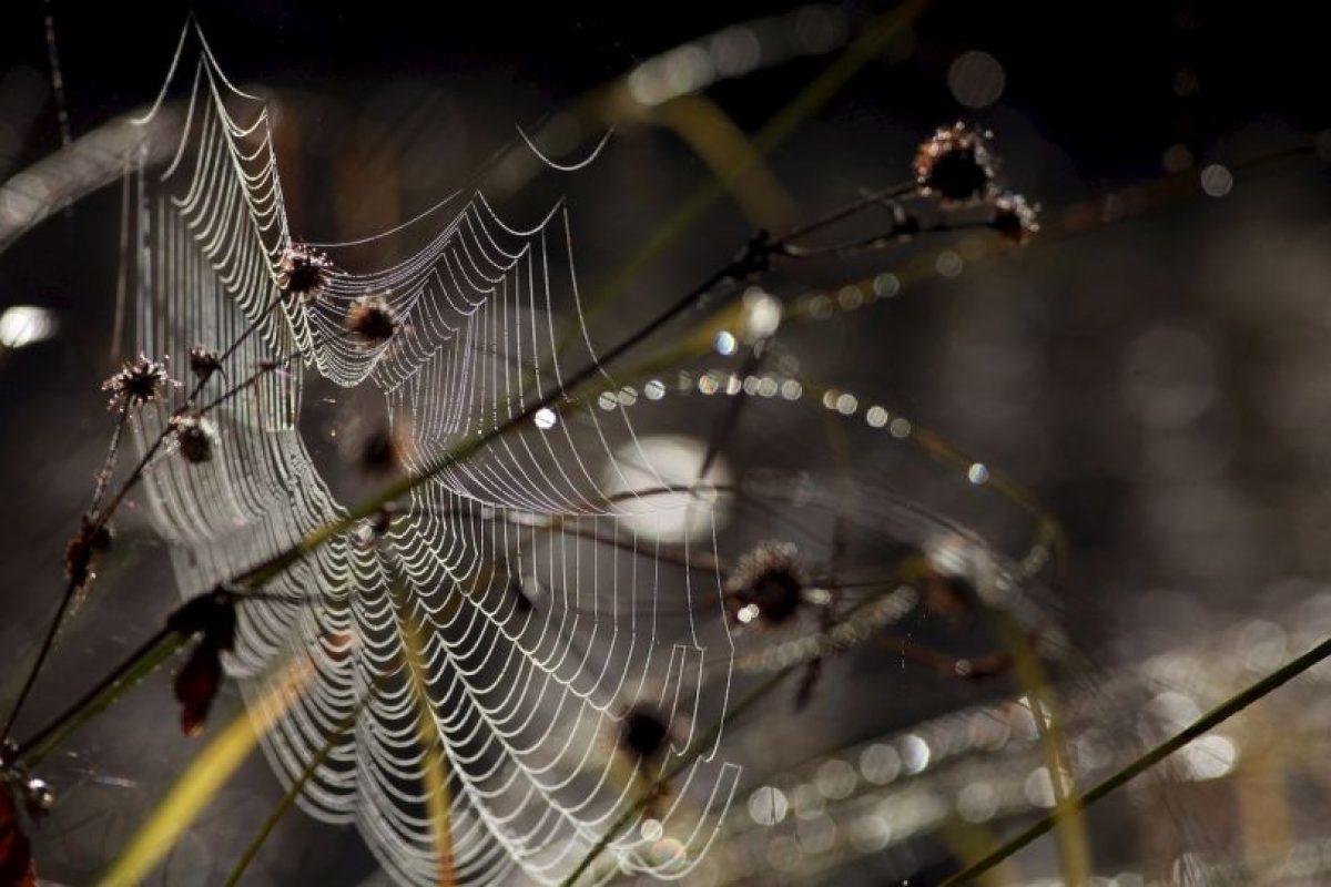 Su telaraña la usan como paracaídas. Foto:Getty Images. Imagen Por: