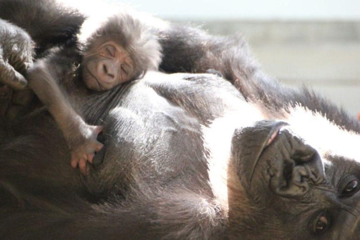 Foto:Reproducción / Facebook Taronga Zoo. Imagen Por: