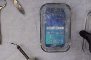 Tapa todos sus orificios y no se puede interactuar con el celular. Foto:PeripateticPandas. Imagen Por: