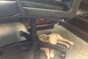 Debajo de la silla del escritorio puede ser cómodo Foto:Reddit. Imagen Por: