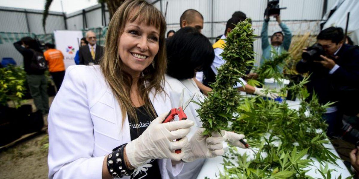 """Ana María Gazmuri: """"Esperábamos al menos una corrección para sacar la cannabis de la lista 1"""""""
