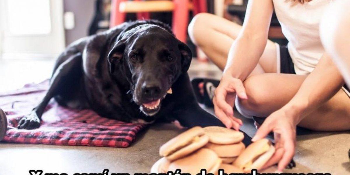 Conmovedora despedida de una mascota emociona a redes sociales