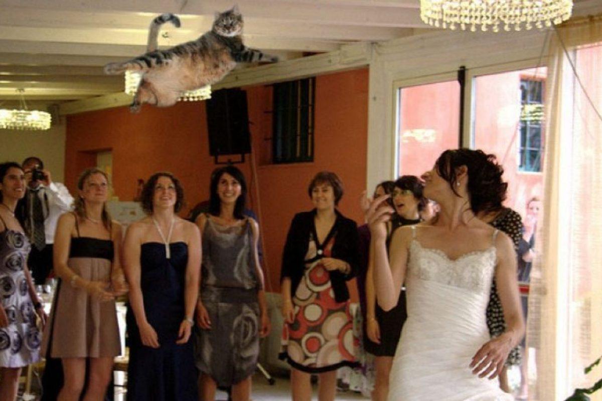 Foto:Vía bridesthrowingcats.com. Imagen Por: