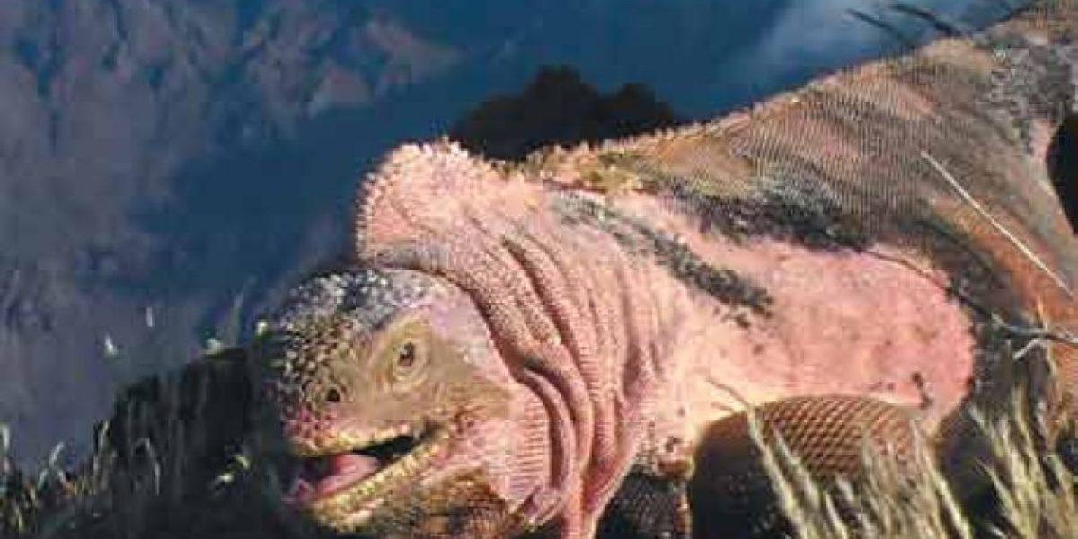 Esta especie está en peligro de extinción por una erupción volcánica