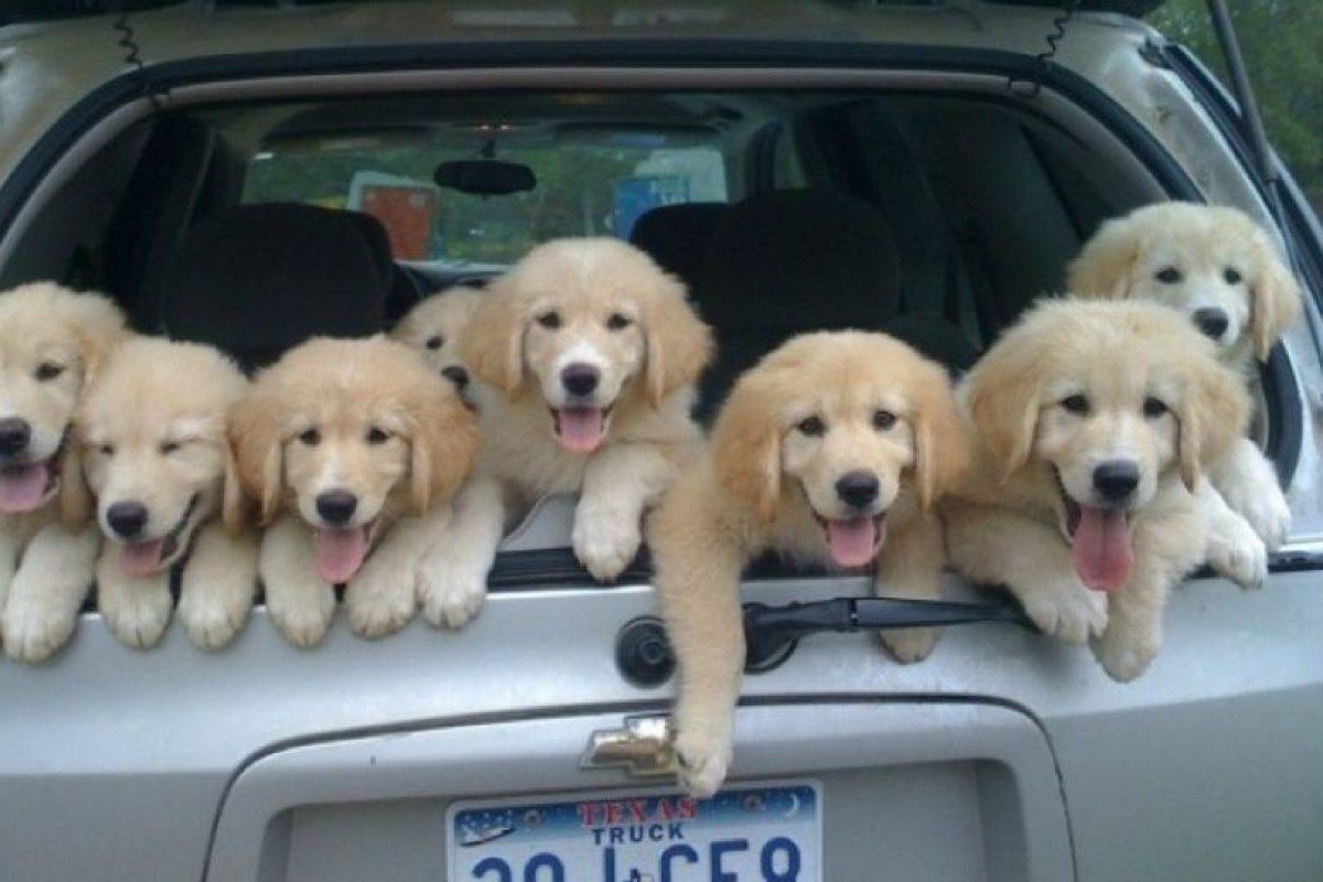 Los cachorritos esperando la partida Foto:Turismo. Imagen Por: