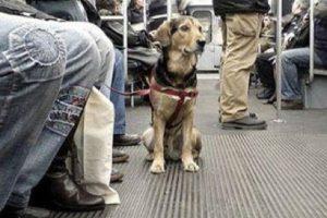 Este perrito ya está acostumbrado a viajar en metro Foto:Tumblr.com/tagged/perro/viaje. Imagen Por:
