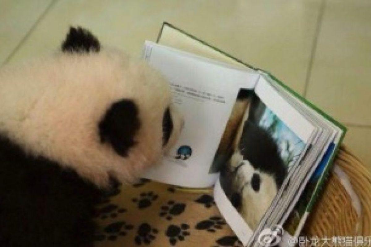 Leyendo… ¿por qué no? Foto:Ipanda. Imagen Por: