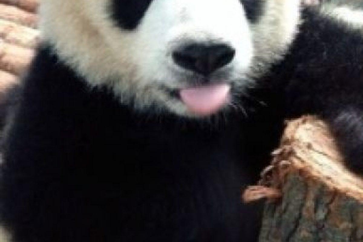 Foto:PandaNewsorg. Imagen Por: