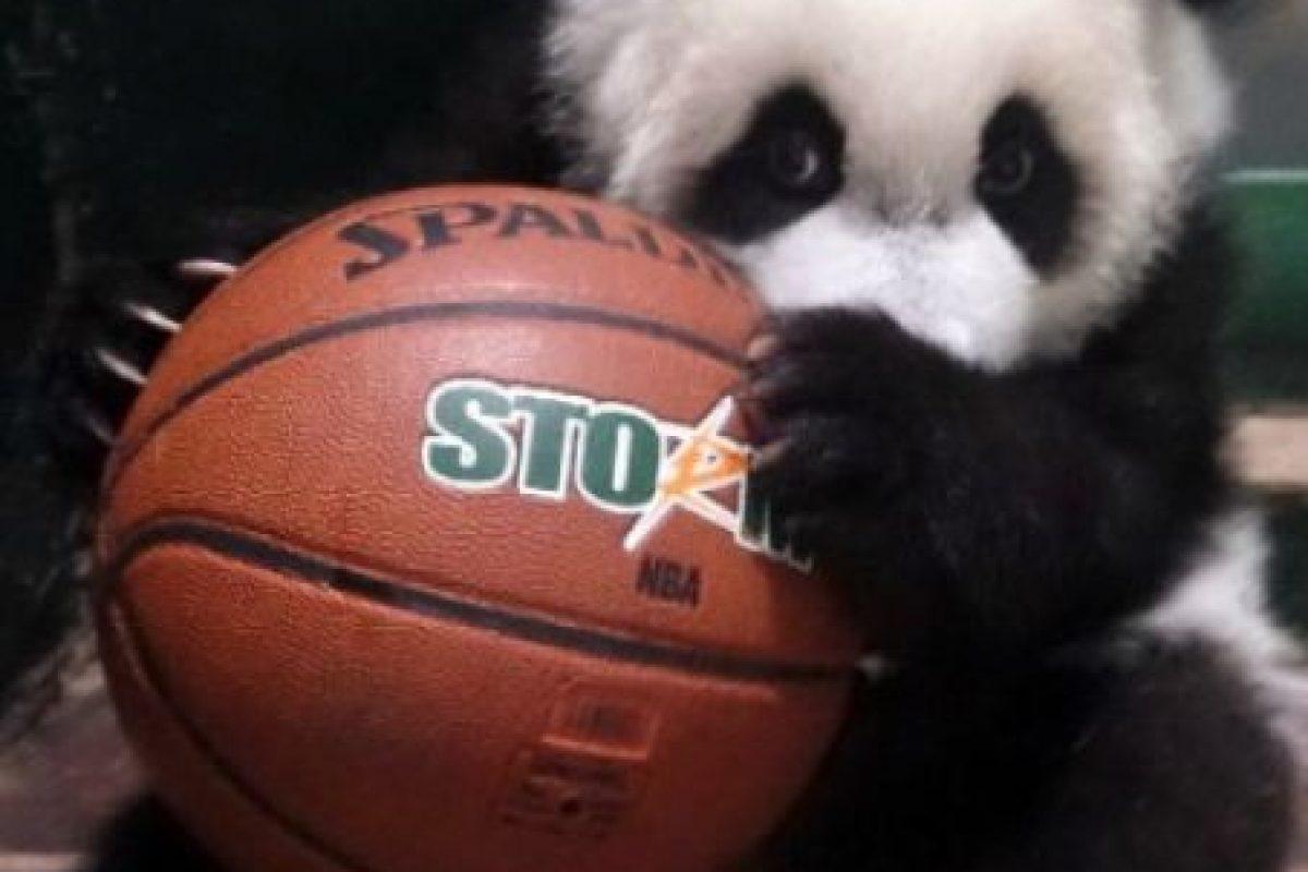¡A jugar baloncesto! Foto:IPanda. Imagen Por: