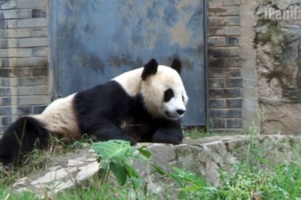 ¿Qué tal esta pose? Foto:Ipanda. Imagen Por: