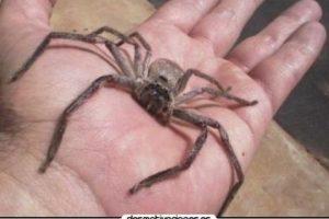 Así que la próxima vez que alguien se burle de que le tienen miedo a las ratas, hormigas o arañas simplemente contesten: Foto:Tumblr.com/Tagged/arañas. Imagen Por: