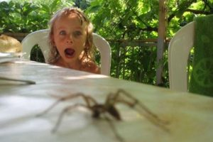 Foto:Tumblr.com/Tagged/arañas. Imagen Por: