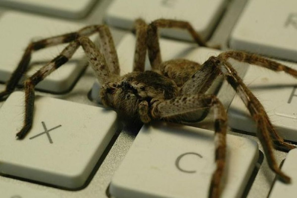"""""""Soy un ser altamente evolucionado"""", sugirió Curtis. Foto:Tumblr.com/Tagged/arañas. Imagen Por:"""