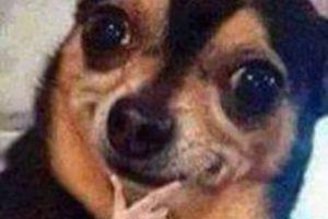 Este perrito ya era famoso, pero en Latinoamérica le pusieron la mano. Foto:vía Facebook. Imagen Por: