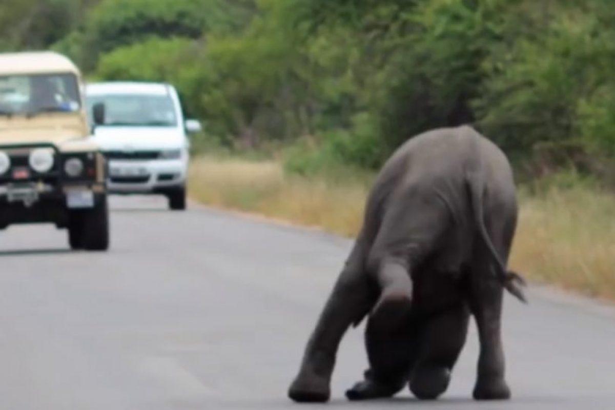 Sucedió en el parque nacional Kruger. Foto:vía Youtube/Kruger Sightings. Imagen Por: