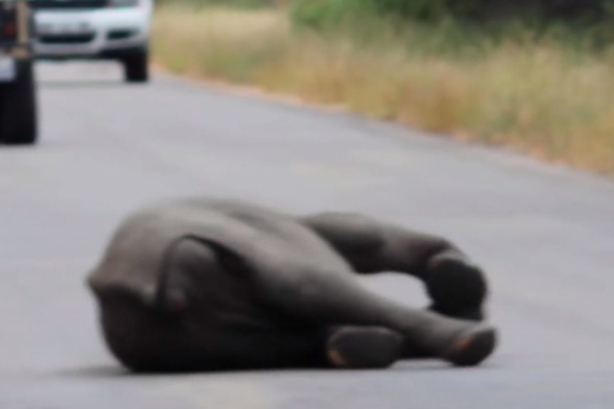 De pronto, no se podía mover. Foto:vía Youtube/Kruger Sightings. Imagen Por: