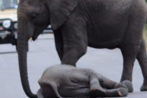 El primero que llegó se ocupó de él. Foto:vía Youtube/Kruger Sightings. Imagen Por: