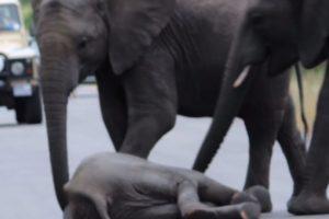 Y otro. Foto:vía Youtube/Kruger Sightings. Imagen Por: