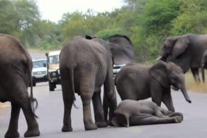 Luego otros más. Foto:vía Youtube/Kruger Sightings. Imagen Por: