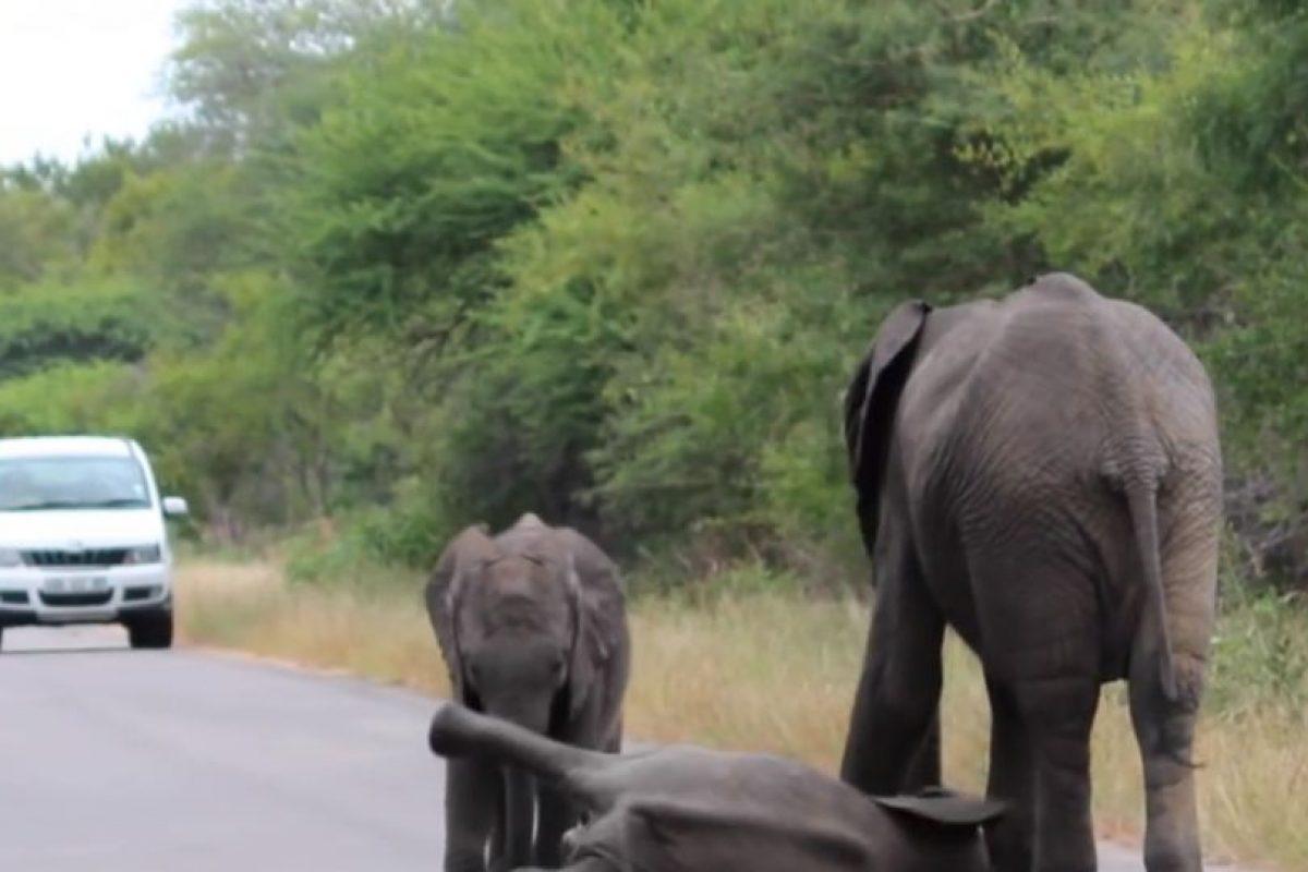 Siguió pendiente de él. Foto:vía Youtube/Kruger Sightings. Imagen Por: