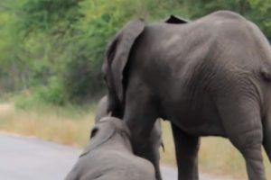 Insistió incesantemente. Foto:vía Youtube/Kruger Sightings. Imagen Por: