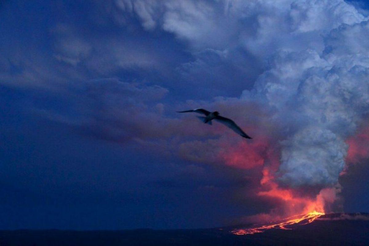 Parque Nacional Galápagos en Ecuador. Foto:AFP. Imagen Por: