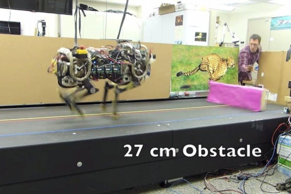 El robot saltando obstáculos de 27 cm de altura. Foto:MIT. Imagen Por: