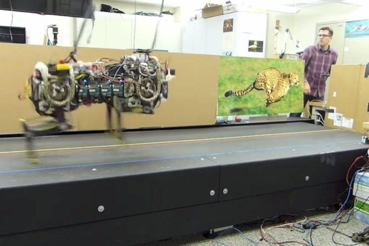 Está inspirado en un animal carnívoro llamado guepardo, también conocido como chita. Foto:MIT. Imagen Por: