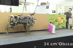 El robot saltando obstáculos de 34 cm de altura. Foto:MIT. Imagen Por: