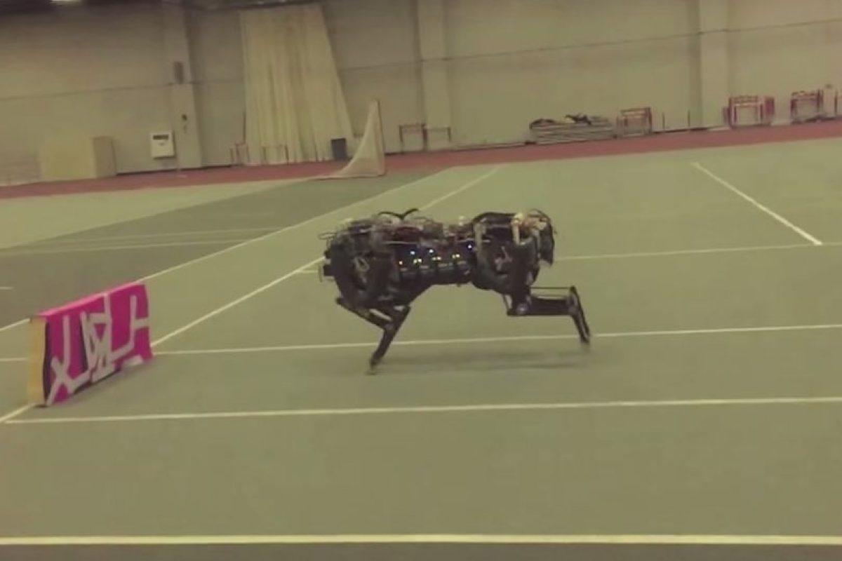 Eso le permite saber en qué momento saltar. Foto:MIT. Imagen Por: